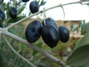 olive noir tawanza