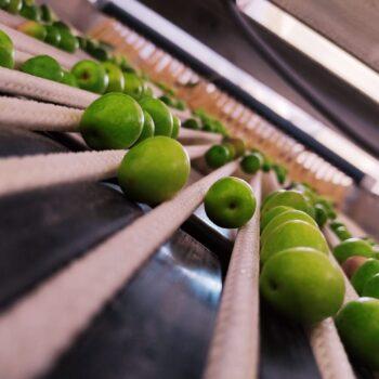 img6_olive